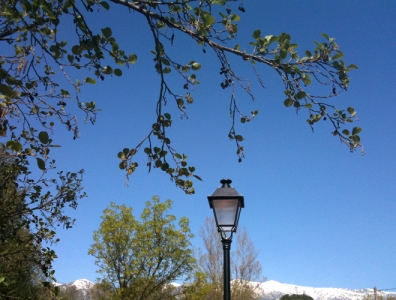 mountains, lamp post, alder tree
