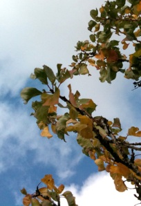 autumn tree top