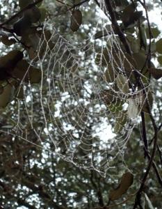 Spider's web with rain drops