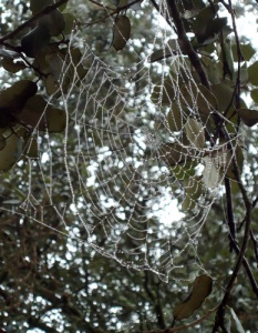 Spider's web with rain drops