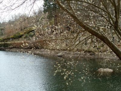 Reservoir, February 2011