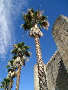 castle and palm trees