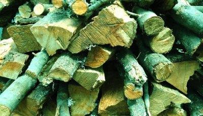 detail of log pile