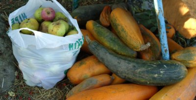 yellow marrows and windfalls for the pigs