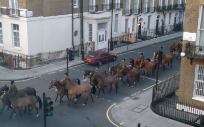 police horses, London