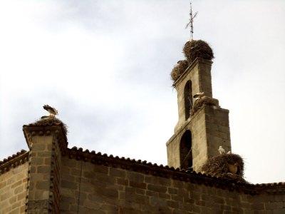 Ávila storks & nests