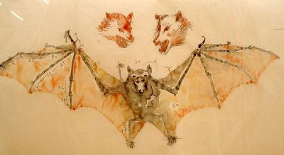 watercolour sketch of bat: Huang Yong Ping