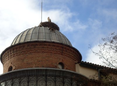 storks nest on domed roof