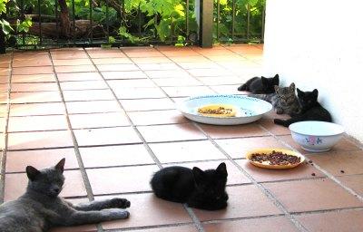 Cat family lounging on sunny verandah