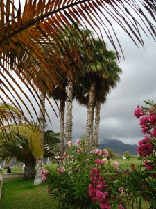 palm trees, Costa de Adeje, Tenerife