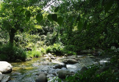 sun and shade on small river running under trees