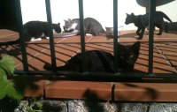 cats on the verandah