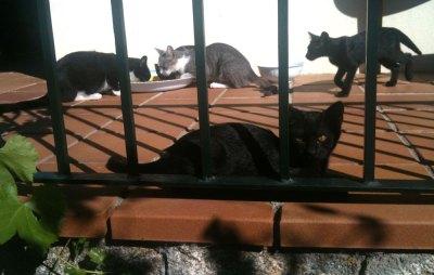 cats on the verandah