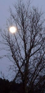 full moon behind tree (winter)