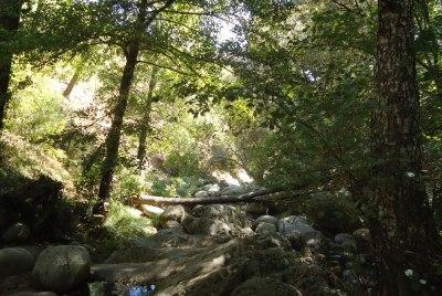 Sunlight filterd through trees by a stream