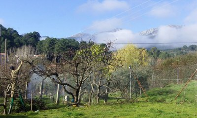 pruning fruit trees; Gredos backdrop