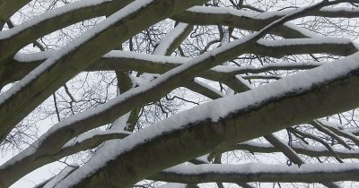 snow on bare tree branches