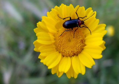 yellow wild flower and bug