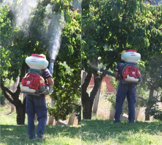 fumigating fruit trees