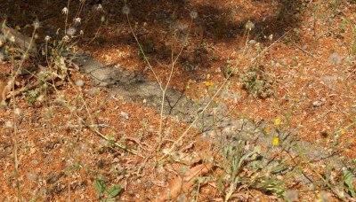 ant track