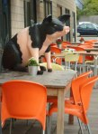 large pig figurine on bar terrace table