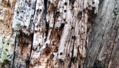 close up of mediaeval wooden timber