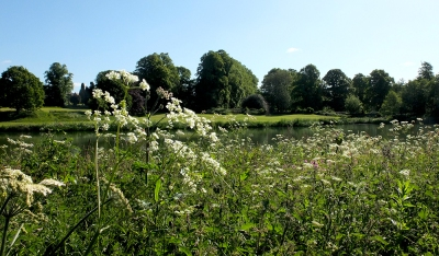 View across a lake with Queen Ann's lace in foreground