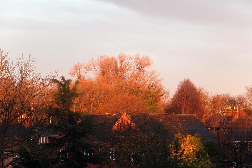 golden sunshine in December