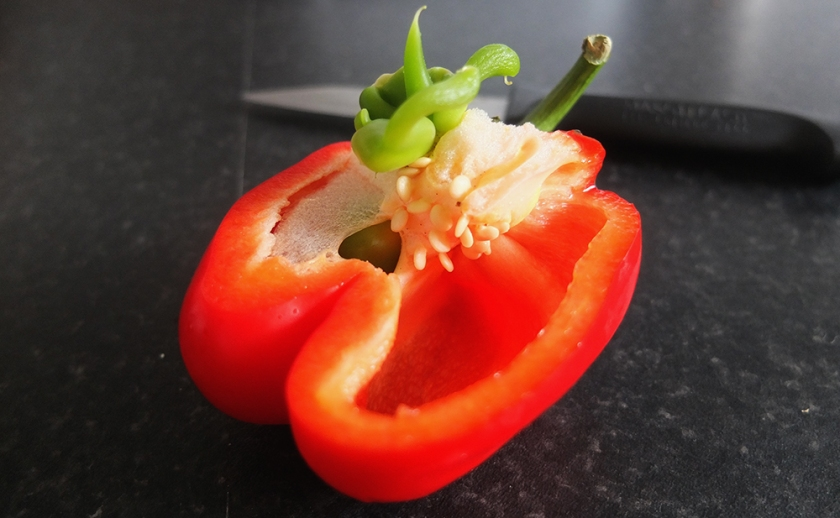 red bell pepper cut through centre