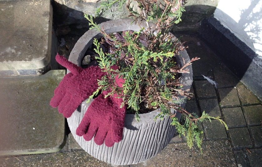 pair of pink gloves in a flower pot