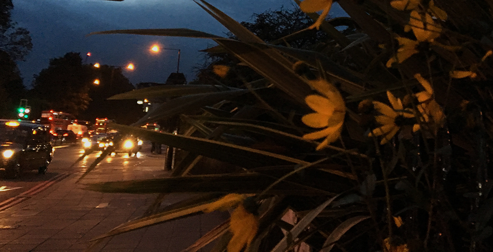 London twilight with yellow daisies