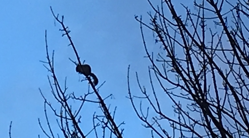 squirrel in bare tree branches silhouetted against sky