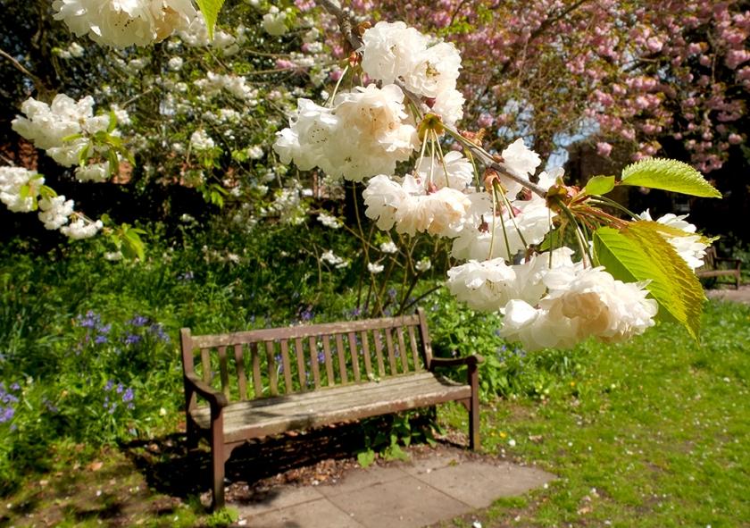 white blossom; garden seat
