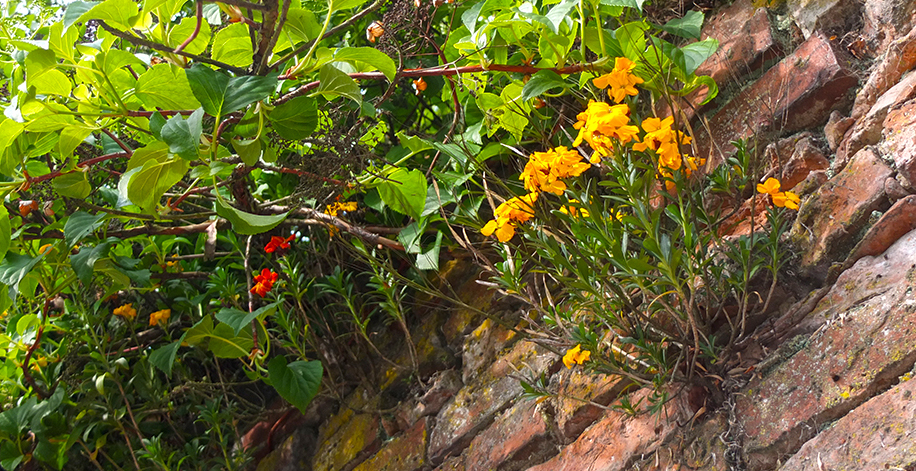 wallflowers and garden walls
