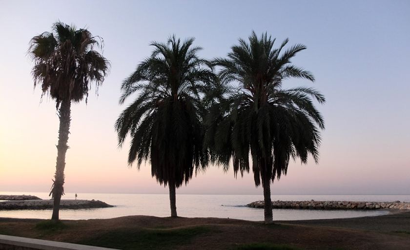 Palm trees. sunrise over the Mediterranean.