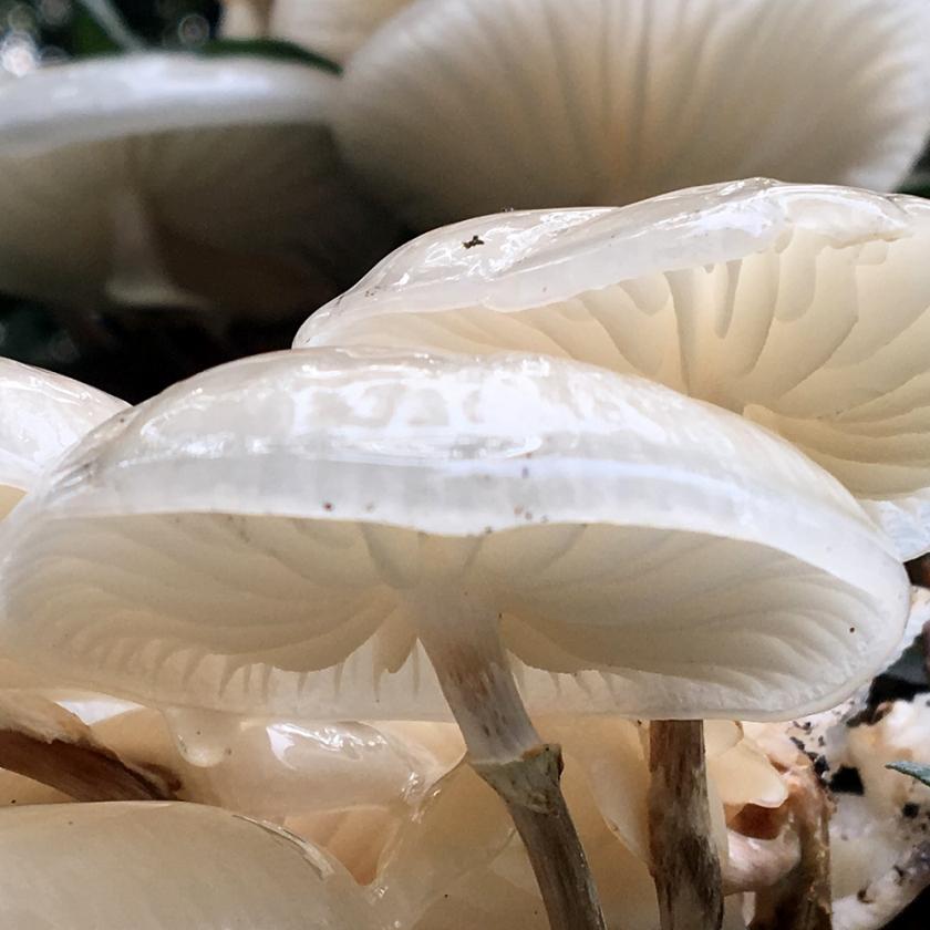 white fungus growing on fallen tree trunk.