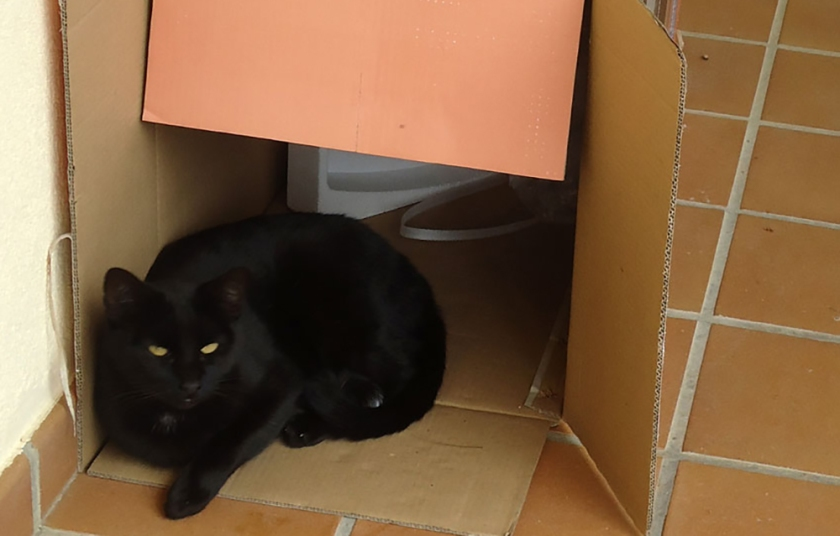 black cat sitting in discarded box
