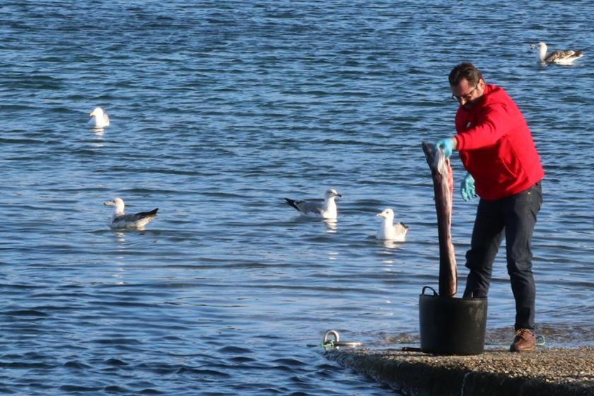 fisherman cleaning small shark-like fish