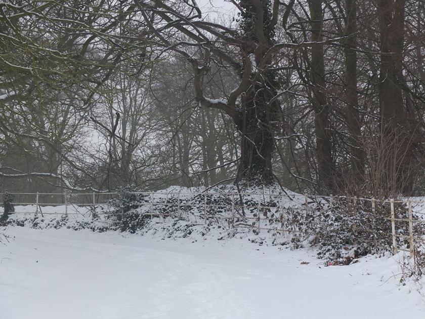 snow, trees, fence