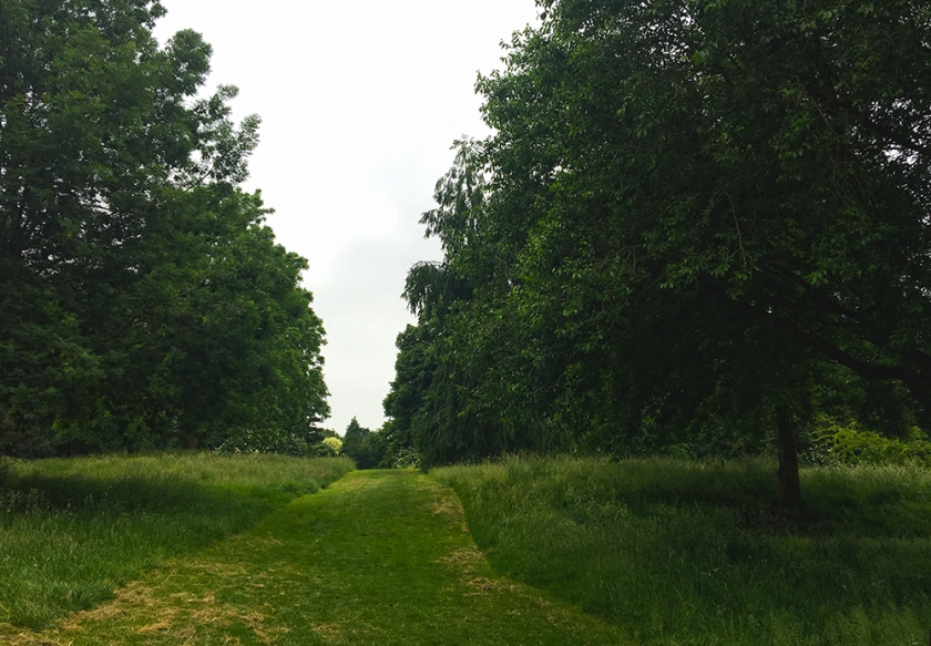 grass path between tall grasses