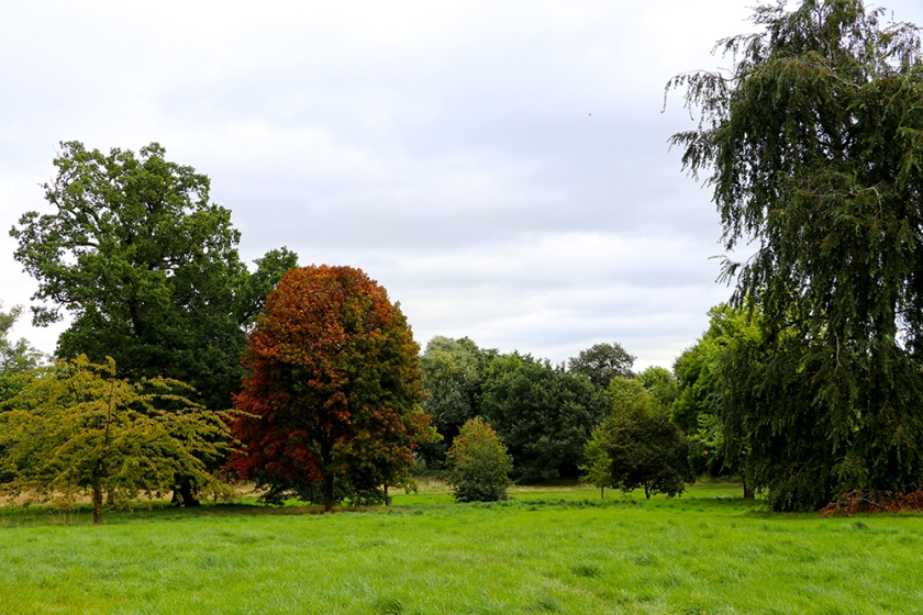 trees at the start of autumn