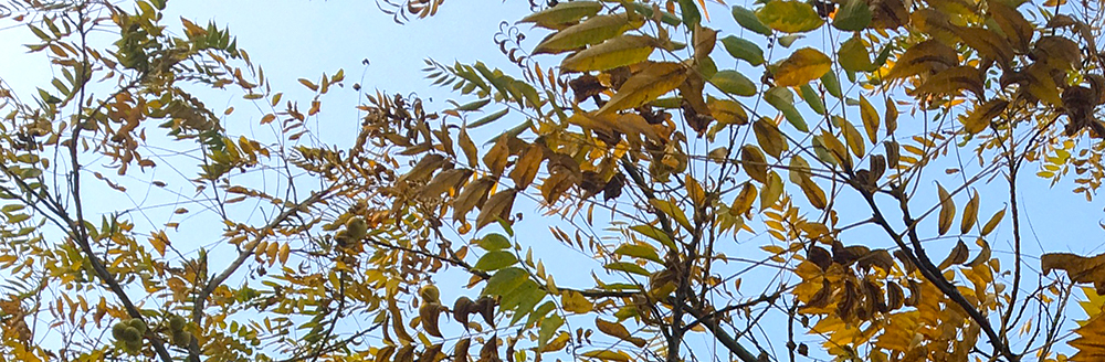 autumn leaves against sky