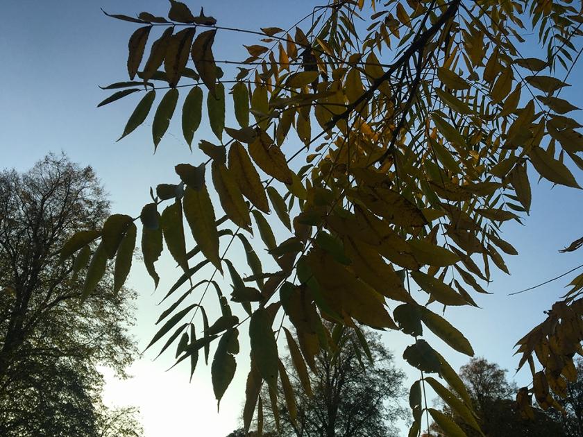 autumn leaves against evening sky