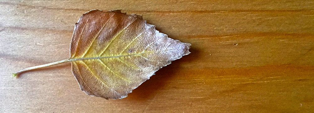 autumn leaf on wooden table
