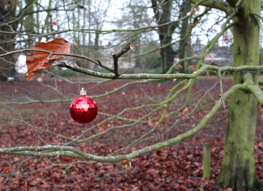 single red Christmas bauble in bare tree branches