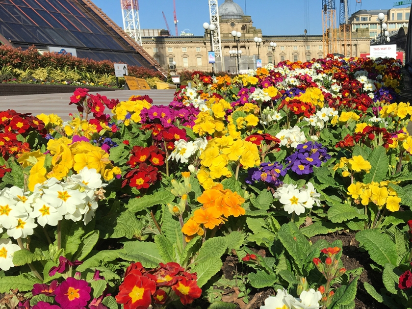 Bedding plants outside Copthorne Hotel, Birmingham