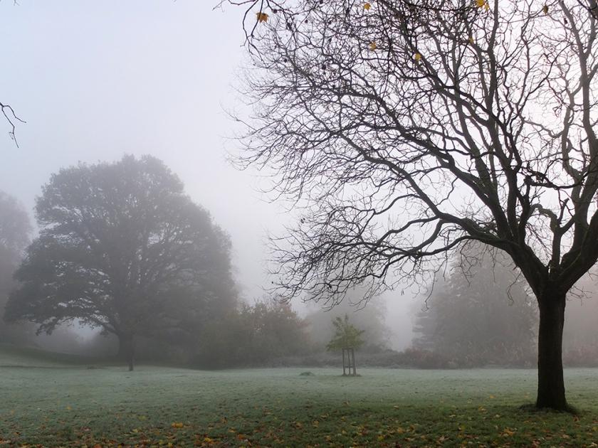 Park. Autumn