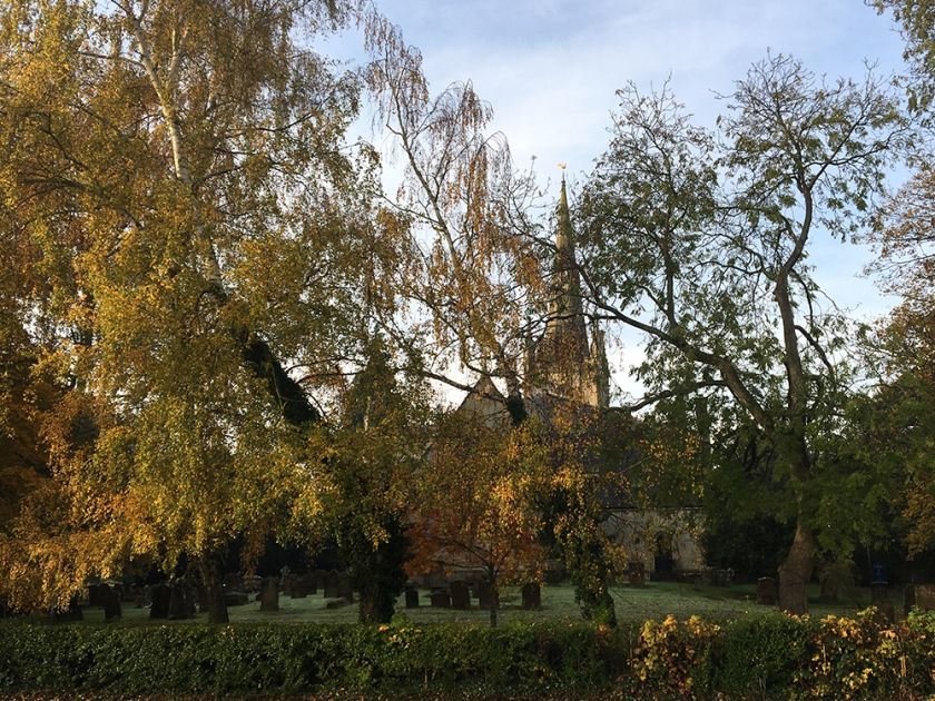 autumn trees with church