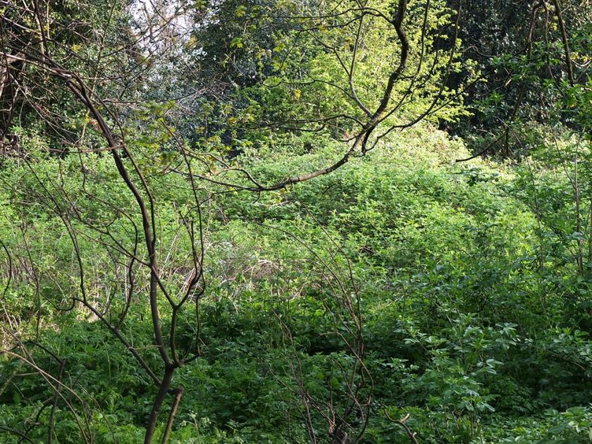 green spring undergrowth
