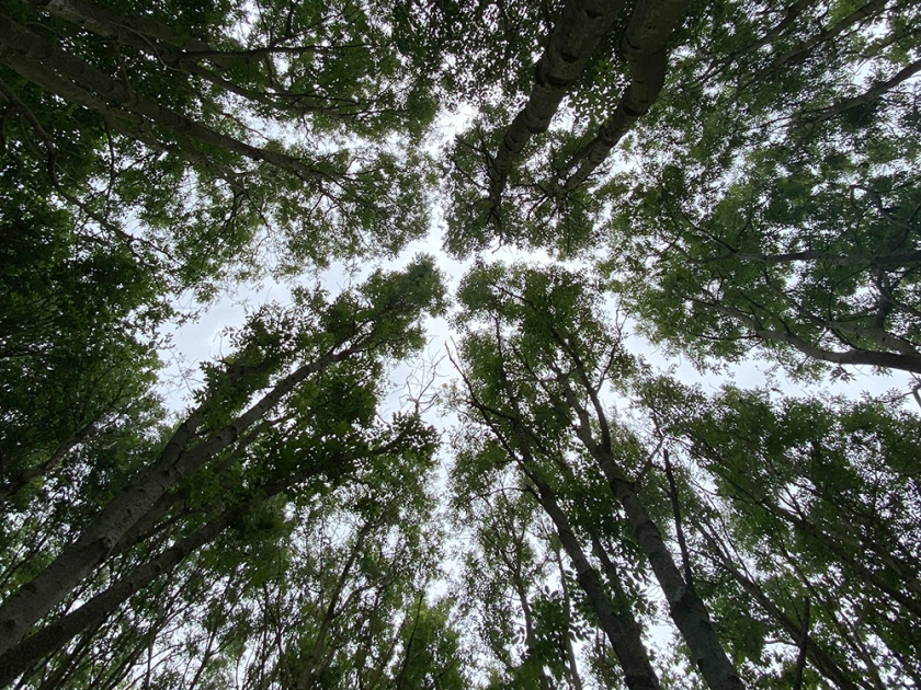 the sky seen through tree tops